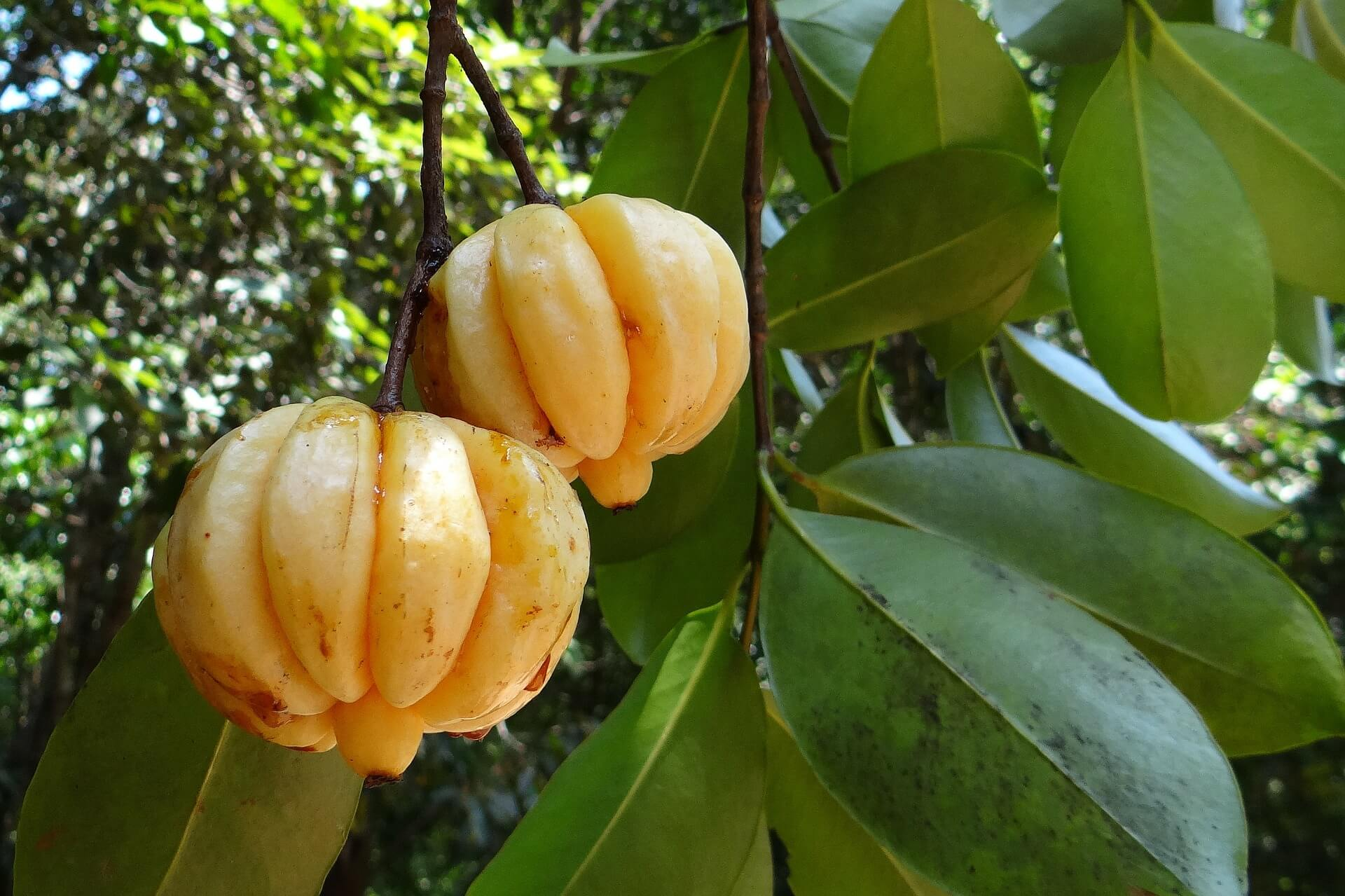 Cheap Pure Garcinia Cambogia Extract On The Market